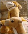 Avatar von camel05
