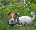Avatar von Jack Russel